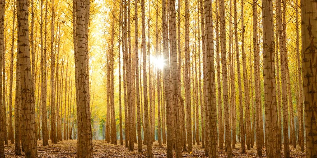 Farbige Multiplexplatten aus Birkensperrholz